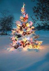 Natal apaixonado