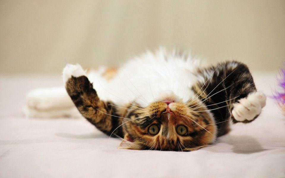 Miau…