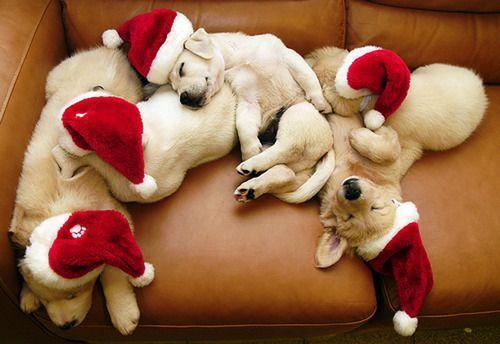Boas Festas - Natal 2015