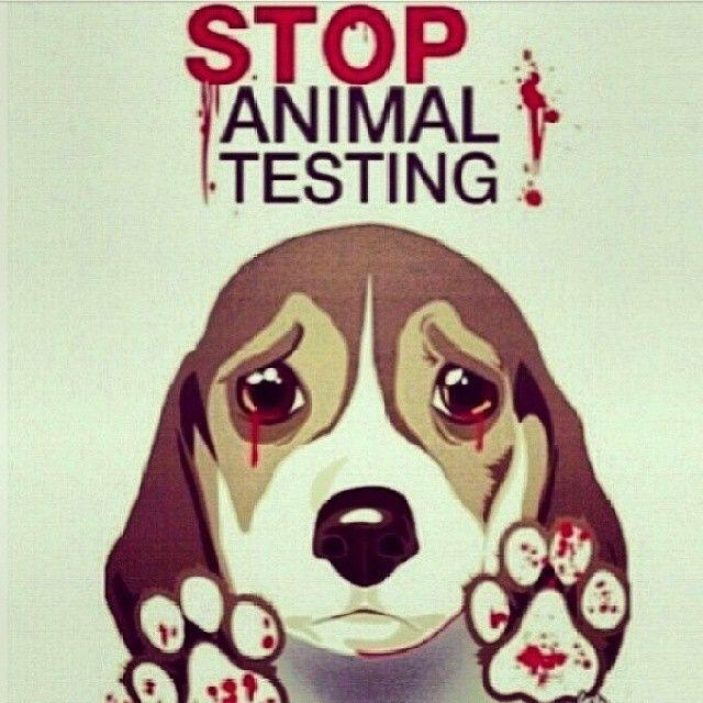 animal testing of products should be banned These points alone should be sufficient to enforce the complete ban on animal testing, yet we remain reluctant some argue that animal testing is inevitable for safe productions of drugs and cosmetics.