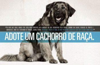 Adote um cachorro de raça