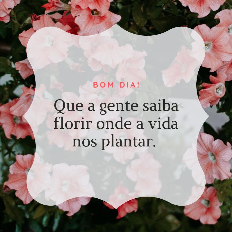 Bom dia! Que a gente saiba florir onde a vida nos plantar.