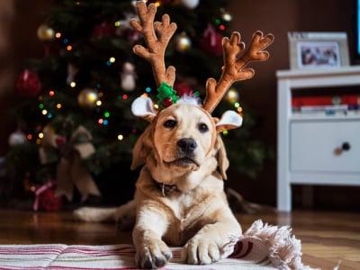 30 mensagens de Natal engraçadas para se divertir no fim de ano