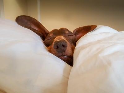 30 mensagens de boa noite abençoada para dormir bem