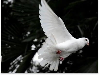35 mensagens de dia mundial da paz para preservar a esperança