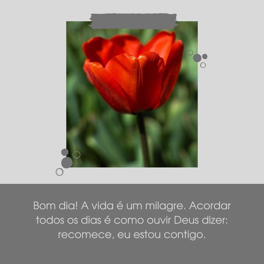 Bom dia! A vida é um milagre. Acordar todos os dias é como ouvir Deus dizer: recomece, eu estou contigo.