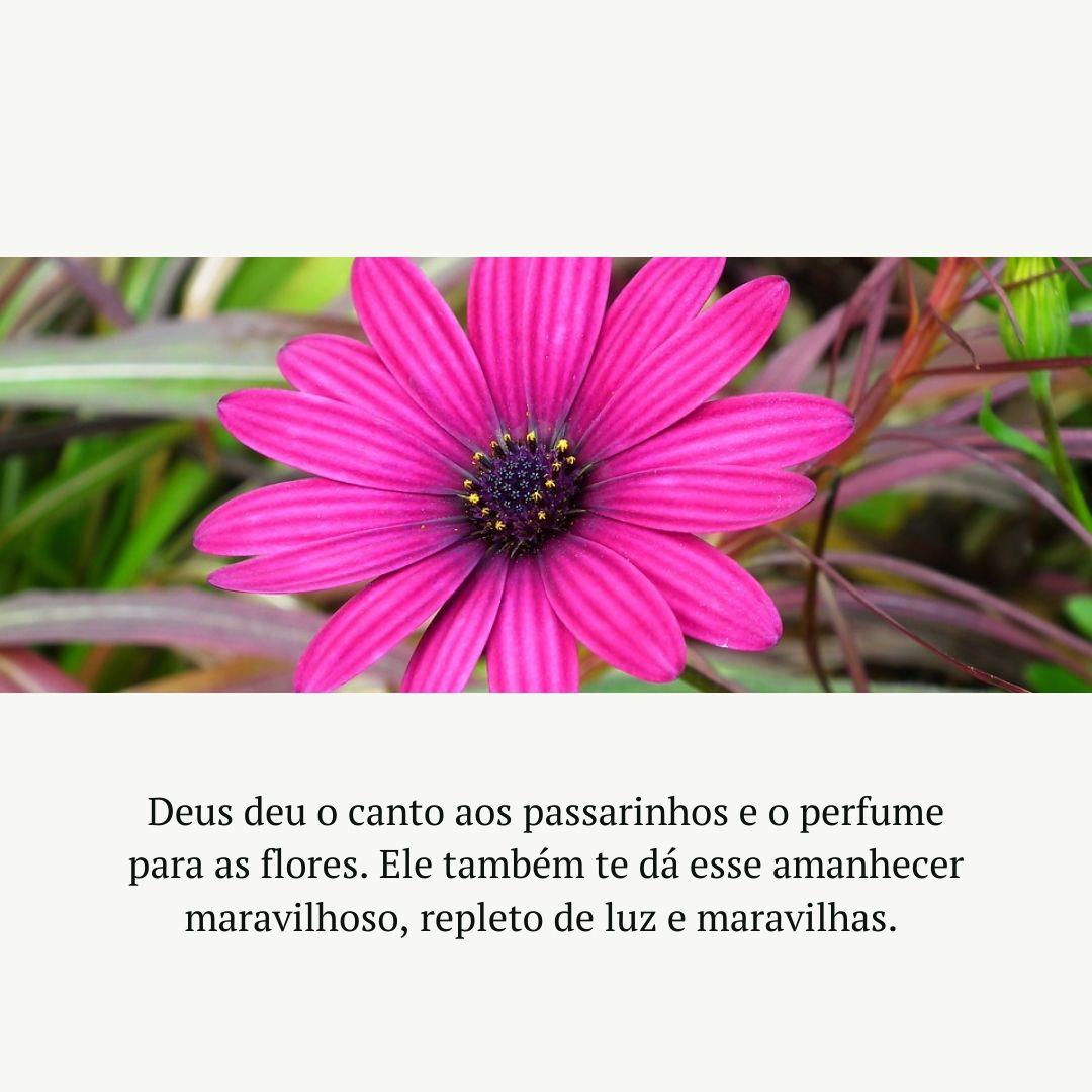 Deus deu o canto aos passarinhos e o perfume para as flores. Ele também te dá esse amanhecer maravilhoso, repleto de luz e maravilhas.