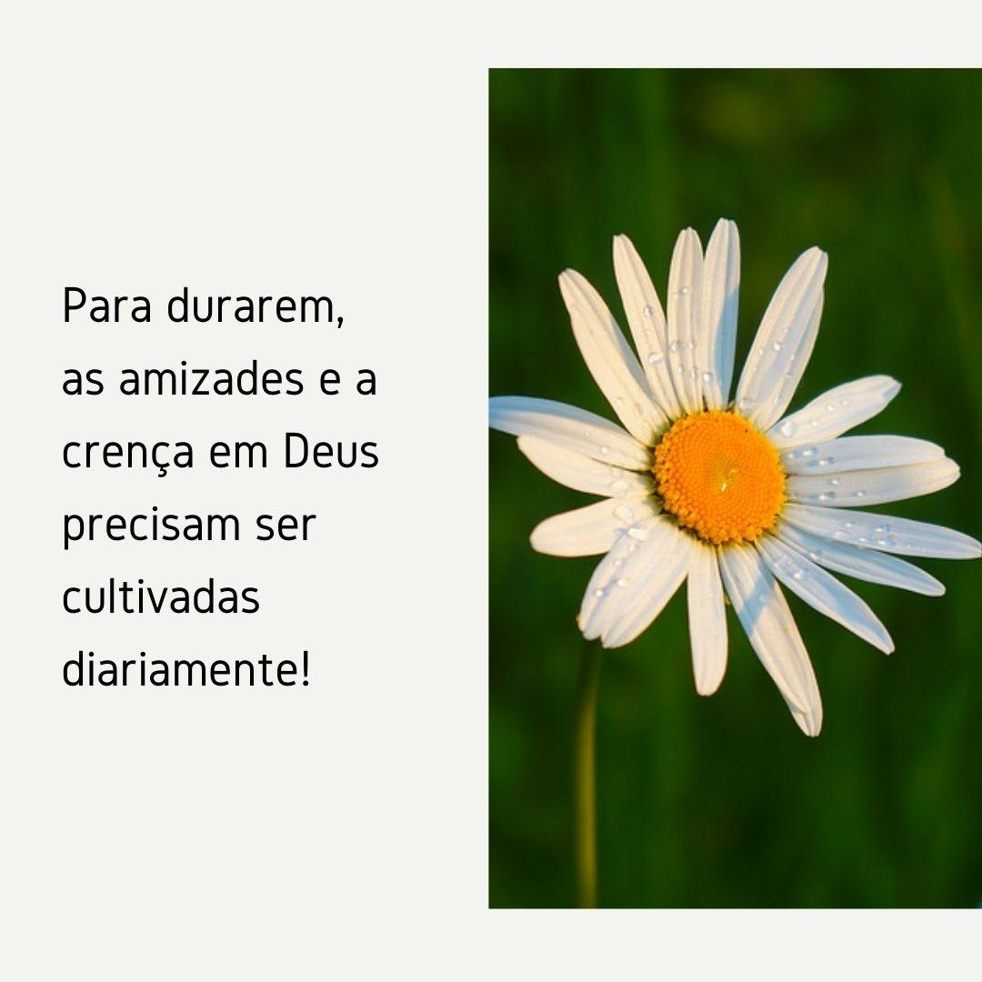 Para durarem, as amizades e a crença em Deus precisam ser cultivadas diariamente!