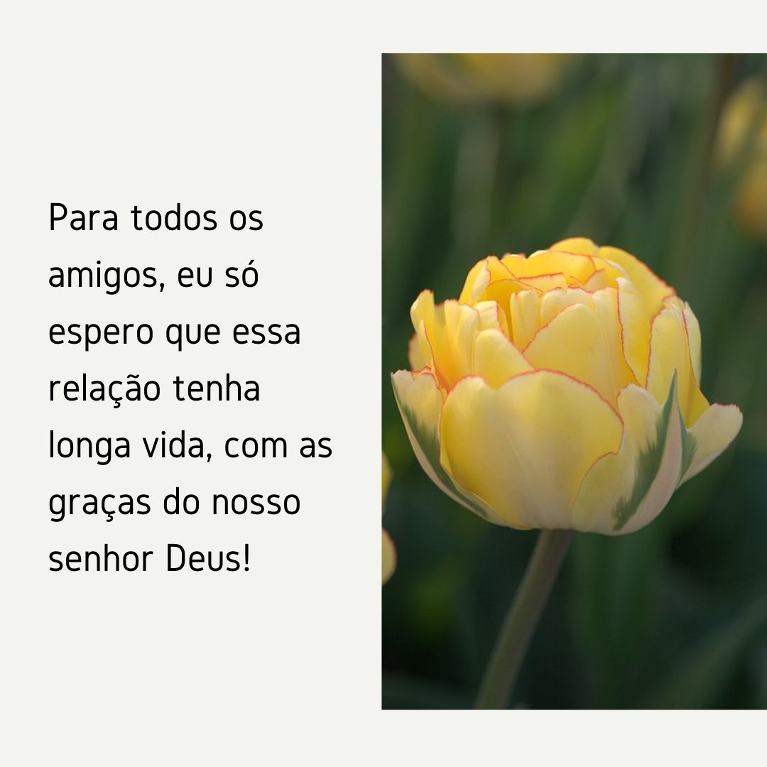 Para todos os amigos, eu só espero que essa relação tenha longa vida, com as graças do nosso senhor Deus!