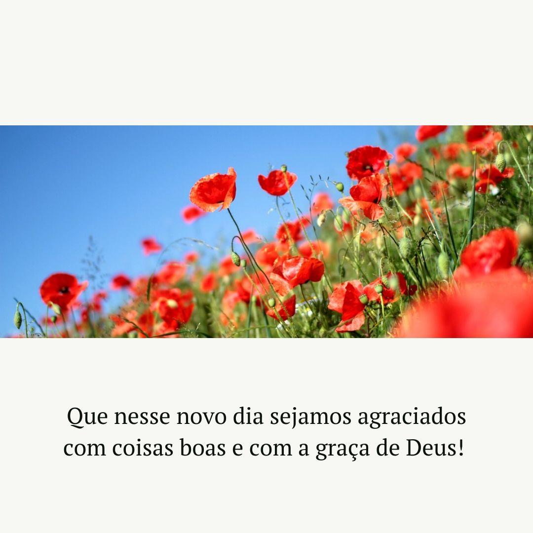 Que nesse novo dia sejamos agraciados com coisas boas e com a graça de Deus!
