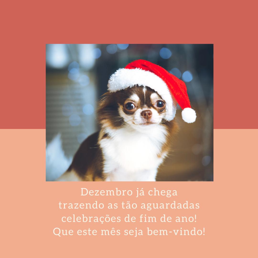 Dezembro já chega trazendo as tão aguardadas celebrações de fim de ano! Que este mês seja bem-vindo!