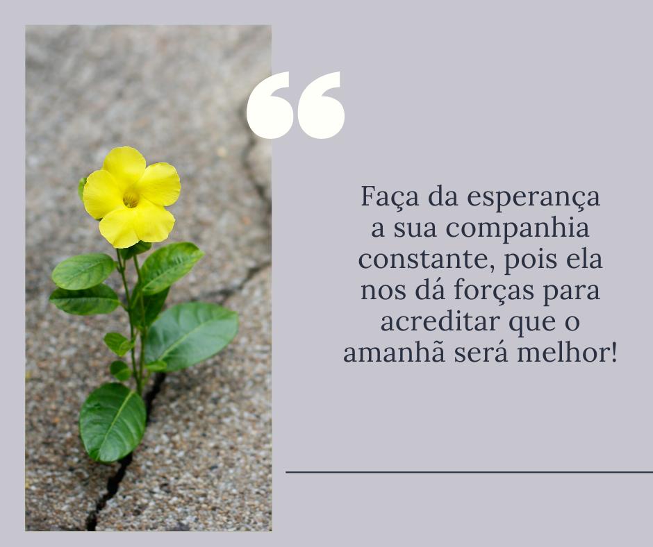 Faça da esperança a sua companhia constante, pois ela nos dá forças para acreditar que o amanhã será melhor!