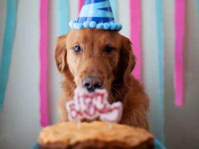 60 mensagens de aniversário engraçadas para alegrar a todos