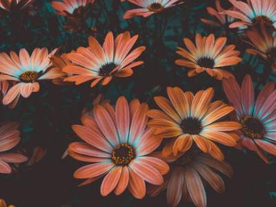 30 mensagens de bem-vindo setembro para celebrar o início da primavera