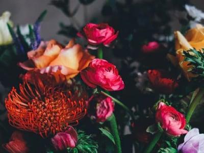 40 mensagens sobre primavera para comemorar a estação das flores