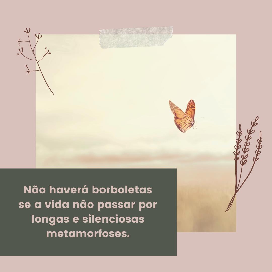 Não haverá borboletas se a vida não passar por longas e silenciosas metamorfoses.