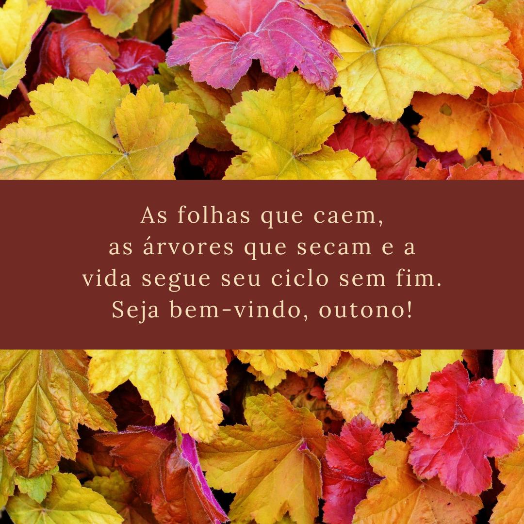 As folhas que caem, as árvores que secam e a vida segue seu ciclo sem fim. Seja bem-vindo, outono!