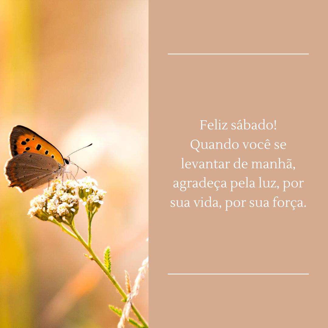 Feliz sábado! Quando você se levantar de manhã, agradeça pela luz, por sua vida, por sua força.