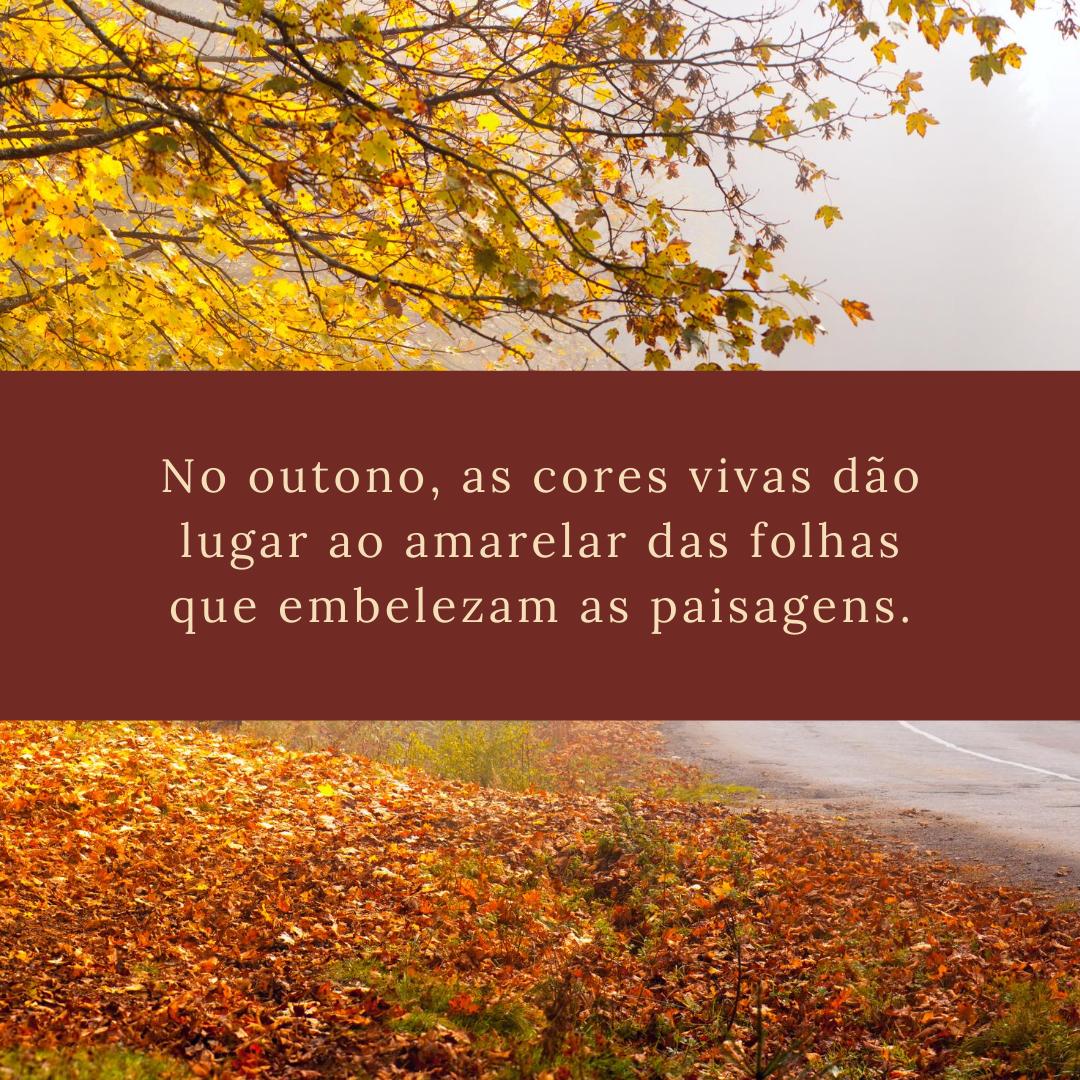 No outono, as cores vivas dão lugar ao amarelar das folhas que embelezam as paisagens.