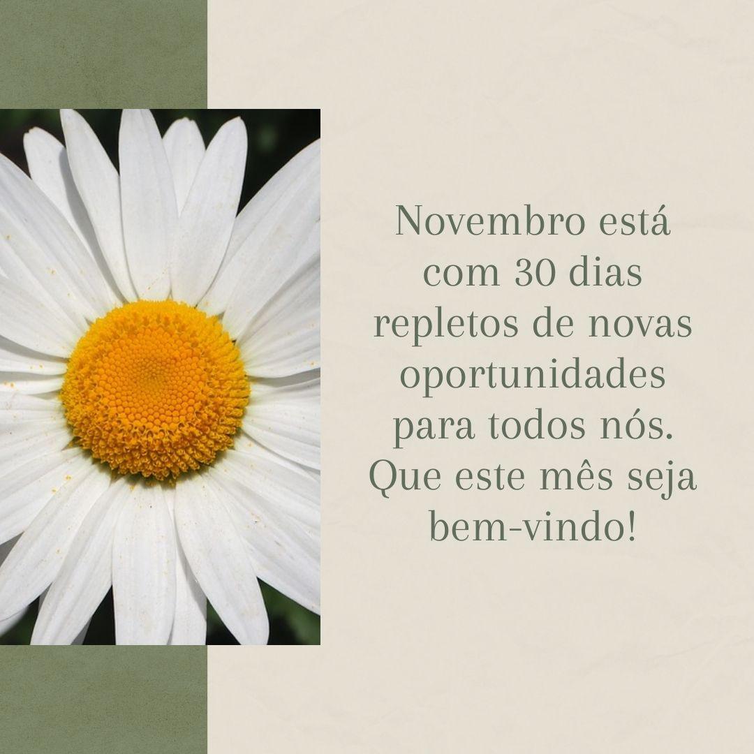 Novembro está com 30 dias repletos de novas oportunidades para todos nós. Que este mês seja bem-vindo!