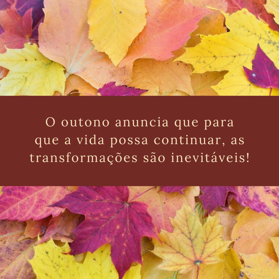 O outono anuncia que para que a vida possa continuar, as transformações são inevitáveis!