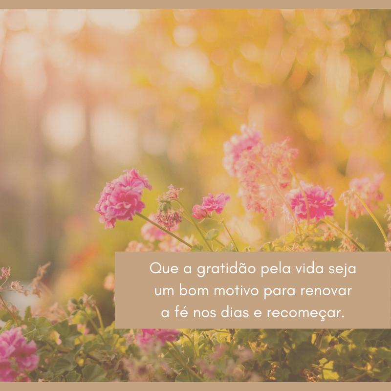 Que a gratidão pela vida seja um bom motivo para renovar a fé nos dias e recomeçar.