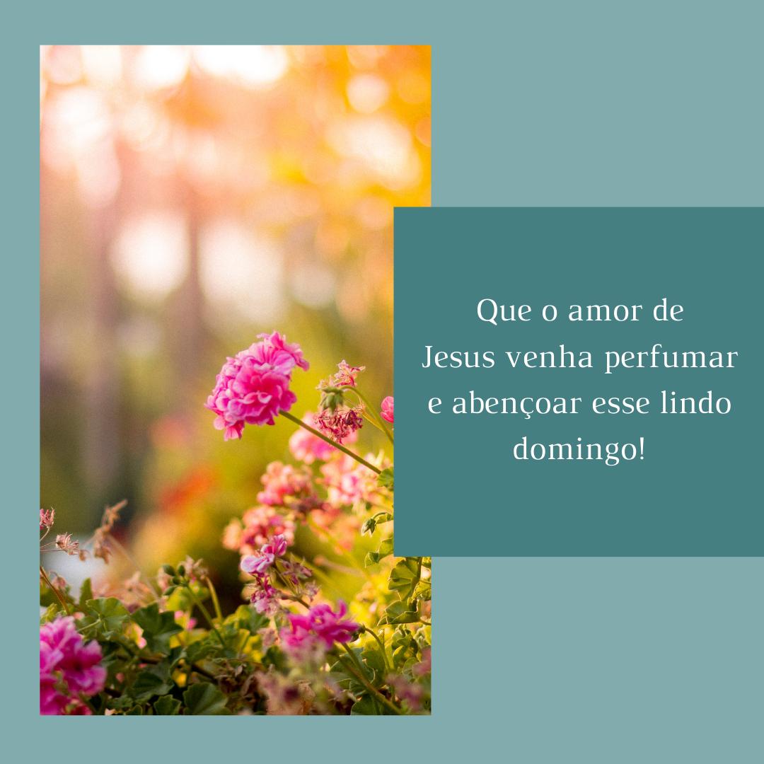 Que o amor de Jesus venha perfumar e abençoar esse lindo domingo!