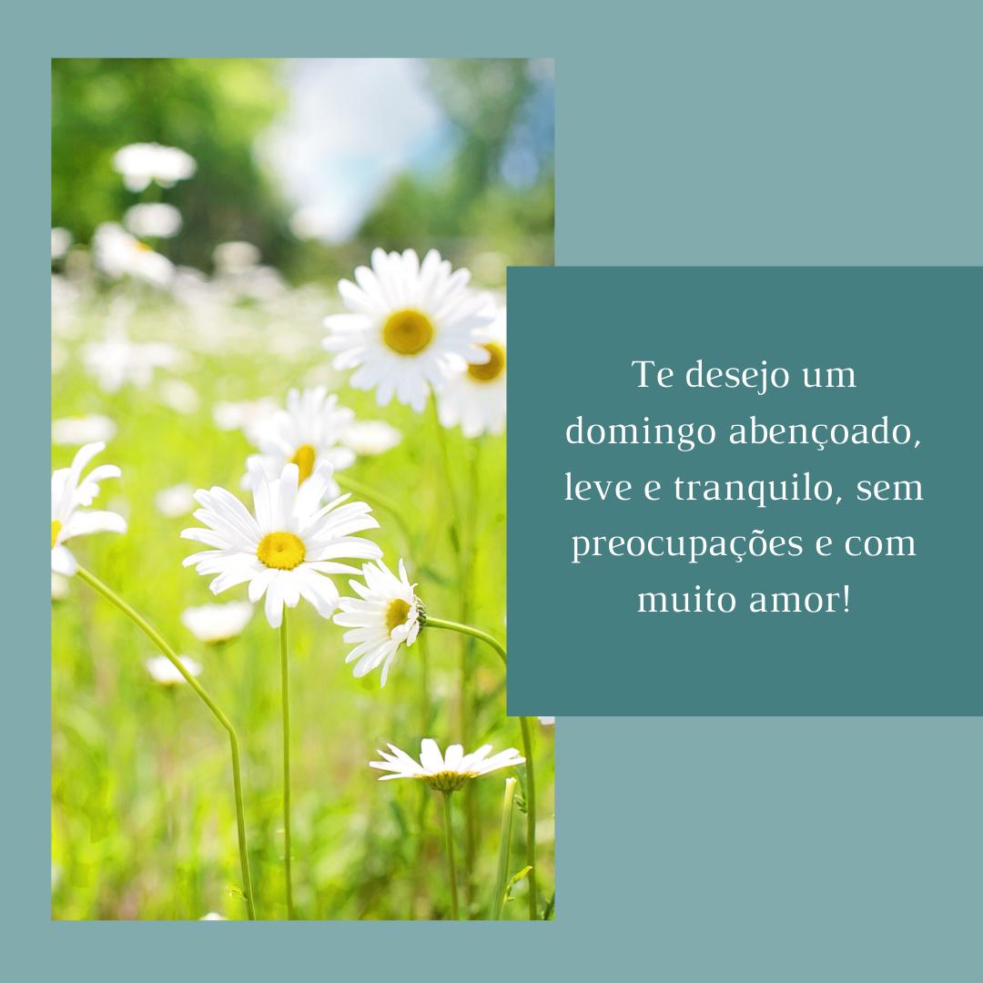 Te desejo um domingo abençoado, leve e tranquilo, sem preocupações e com muito amor!