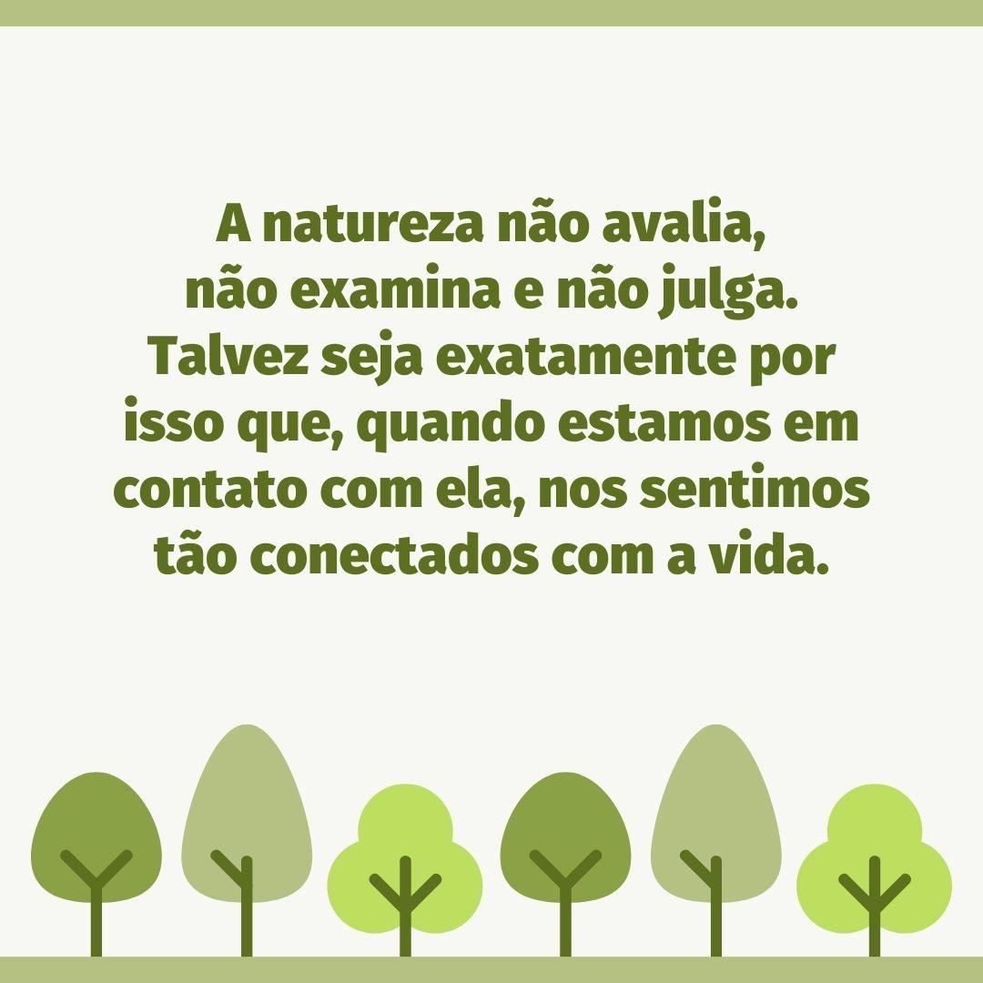 A natureza não avalia, não examina e não julga. Talvez seja exatamente por isso que, quando estamos em contato com ela, nos sentimos tão conectados com a vida.