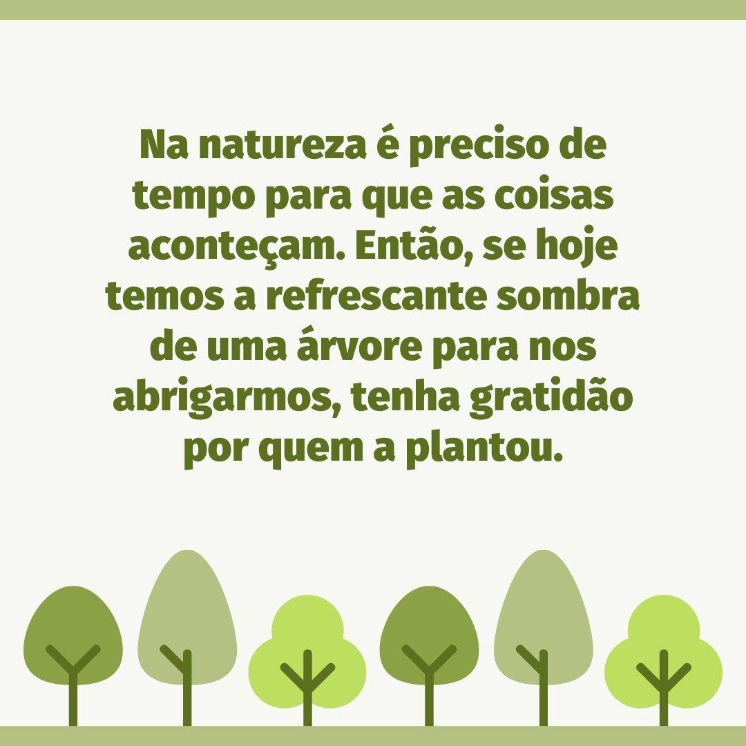 Na natureza é preciso de tempo para que as coisas aconteçam. Então, se hoje temos a refrescante sombra de uma árvore para nos abrigarmos, tenha gratidão por quem a plantou.